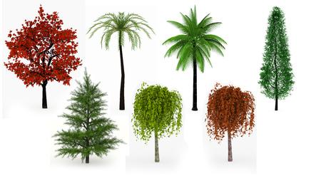 arbre vue dessus: Beaucoup d'arbres de palmiers, de feuillus et de conifères isolé sur fond blanc