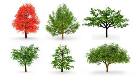 Set of six trees isolated on white background photo