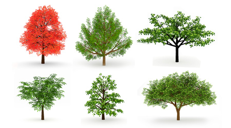garden path: Set of six trees isolated on white background