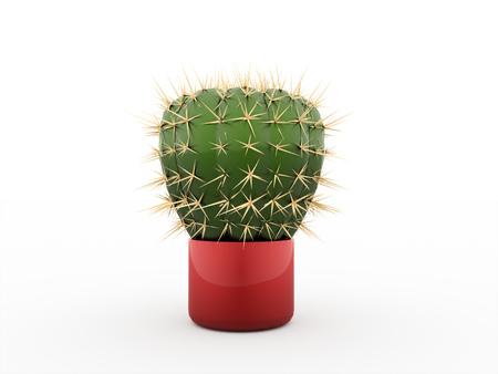 subtropics: Cactus rendered isolated on white