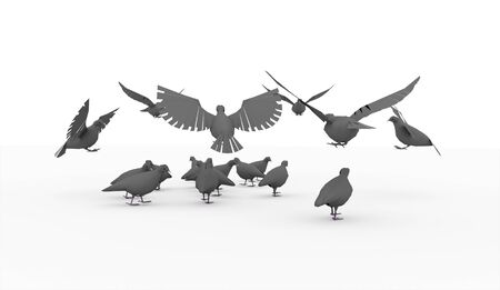palomas volando: Palomas volando, aislado en fondo blanco