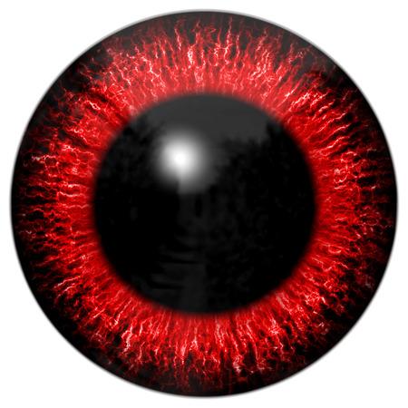 big eye: Big eye generated on white background