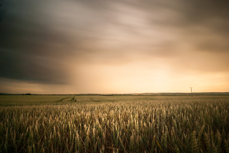 Summer field with a storm. Field on sunset.