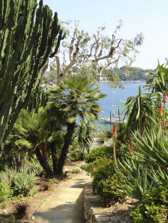 Villefranche-sur-Mer mediterranean vegetation Stock Photo - 14937668