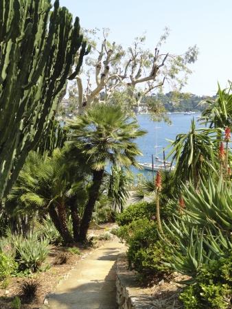 Villefranche-sur-Mer mediterranean vegetation Stock Photo - 14937668