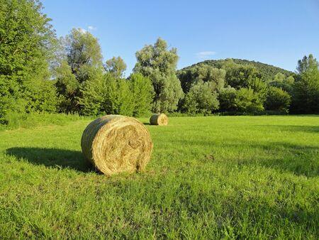 field of straw bales