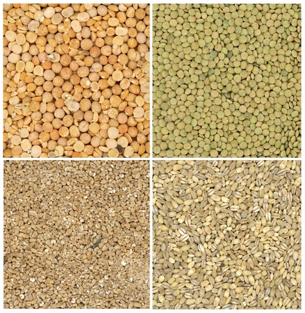 unbroken: collection of lentil,wheat,pearl-barley and pea backgrounds