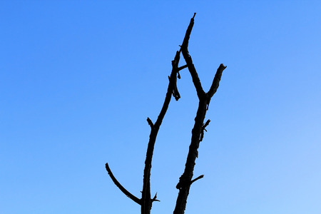 limb tree over the autumn fall background at silhouette photo