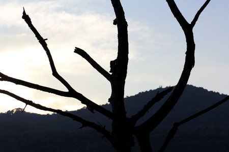 limb tree over the autumn fall with mountain view background at silhouette photo
