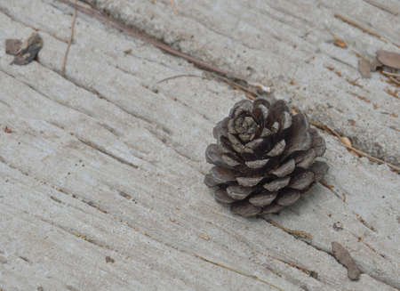Cedar cones on the floor photo