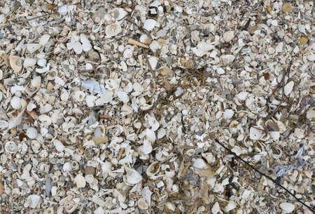 karkas: Karkas van Shell gebruiken voor achtergrond Stockfoto