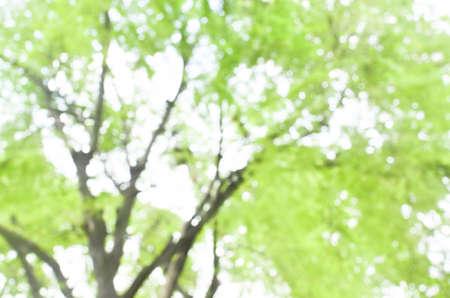 Blurred blackground of defocused tree and green leaf