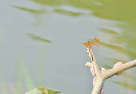 watergarden: dragonfly on the river in forest