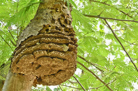 Wasp nest on tree in forest photo