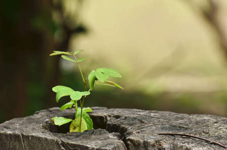 young plant growing on tree stump photo