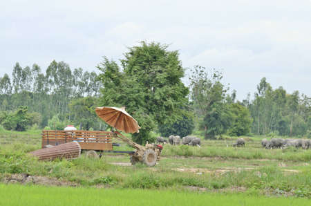 thai country tractor on rice field photo
