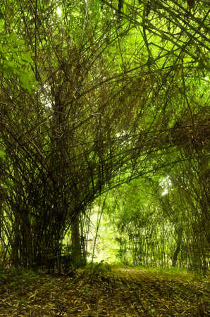 part of bamboo forest photo