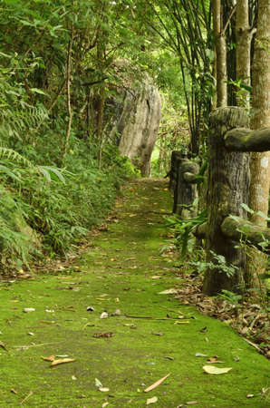 pathway in forest covered with mos,Thailand