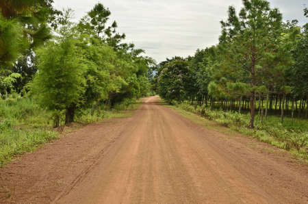 clay stone road in jungle: thai country road to forest Stock Photo