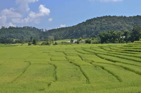ricefield on mountain in Thailand photo