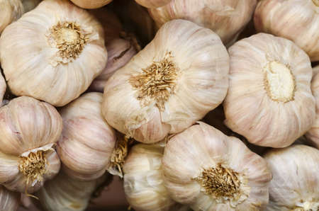 close up of garlic photo