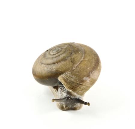 snail isolated on white background Stock Photo