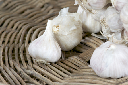 organic garlic  Stock Photo - 22660483