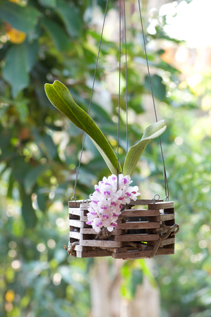 orchid plant in pot  Stock Photo