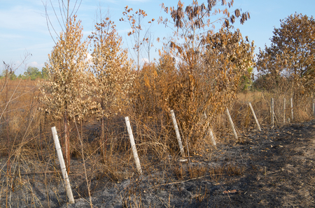 squatter: Slash and burn cultivation in the country of Thailand Stock Photo