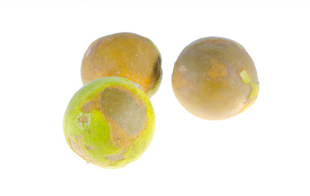 spoilage: Rotten lemon on white background Stock Photo