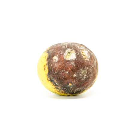 spoilage: rotten bergamot on white background