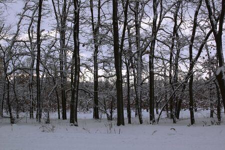 winter forest. beautiful winter evening landscape view.