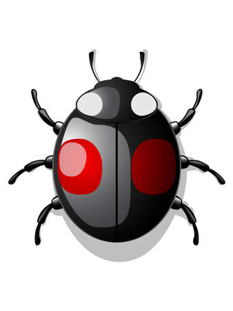 black ladybug Illustration
