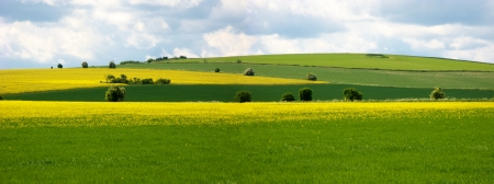 Fields of rape seed and green grass with blue sky on the Ridgeway, England