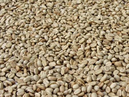 drying: Coffee beans laid out to dry in the sun Stock Photo