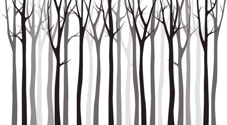 Birch tree wood silhouette on white background Imagens - 118967902