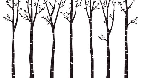 Silhouette bois bouleau sur fond blanc