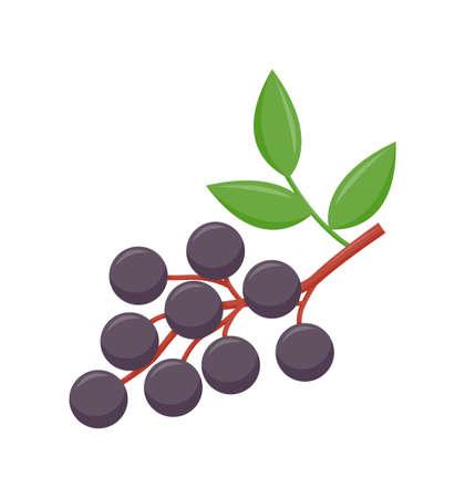 Elderberry with green leaves isolated on white background, flat design, fruit vector illustration Çizim