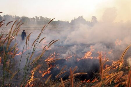 Farmer sets fire, burning grass, straw and stubble with heavy smoke in rice field at sunset, causing pm 2.5