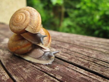 Small snail riding on the shell of bigger snail and the big one carries the smaller one, showing generous and support