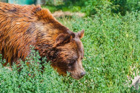 Brown bear Фото со стока