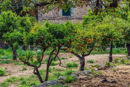 The Garden of the Jardines de Alfabia Imagens - 131100052