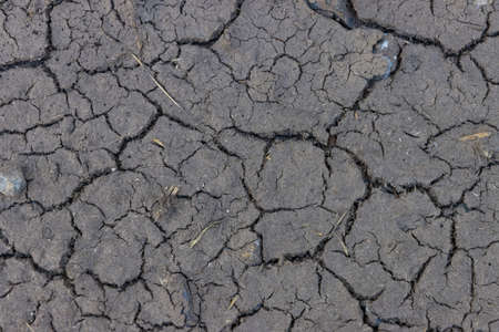 Dry waterless natural mud in the summer