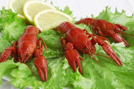 plato de ensalada: Cangrejos cocidos en plato de ensalada