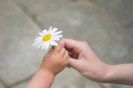agradecimiento: El pequeño bebé que da la flor blanca de la madre Foto de archivo