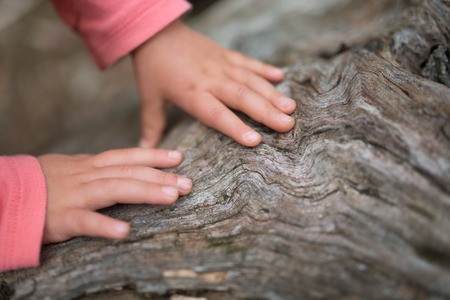 木に触れる小さな手します。