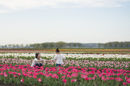 Mother and daughter playing in the tulip field 写真素材