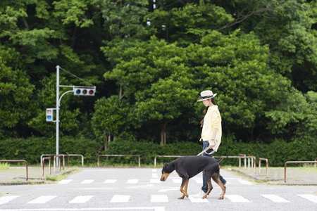 Owner and large dog walking on the crosswalk