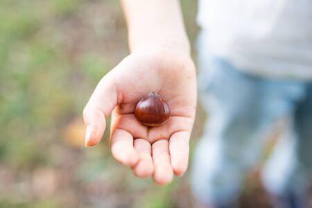 Child's Hand Holding Chestnut