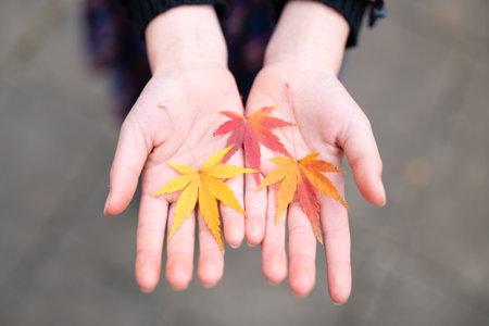 Children's hands with fallen leaves 版權商用圖片